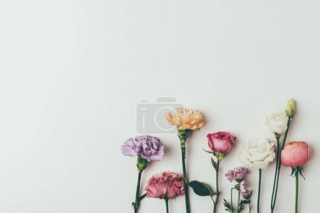 top view of beautiful blossoming flowers isolated on grey