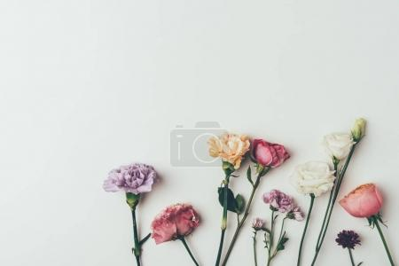 top view of beautiful blooming flowers isolated on grey