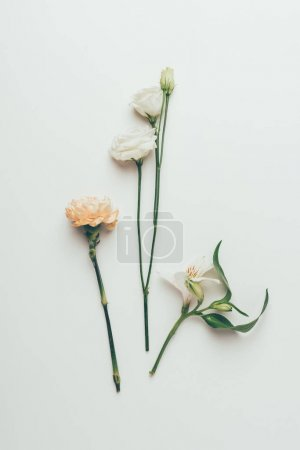 Photo pour Vue rapprochée de belles fleurs à fleurs tendres isolées sur gris - image libre de droit