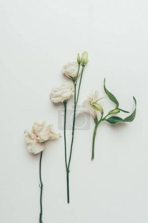 Photo for Close-up view of beautiful tender white blooming flowers isolated on grey - Royalty Free Image