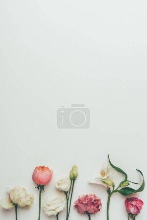 hermosas flores de color blanco y rosa sobre fondo gris