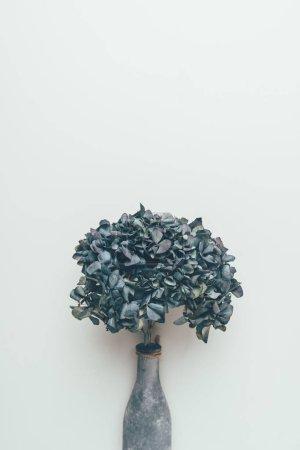 Photo pour Belles fleurs bleues dans un vase isolé sur fond gris - image libre de droit
