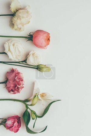 beautiful tender white and pink flowers on grey background