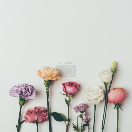 close-up view of beautiful floral border made from various blooming flowers isolated on grey