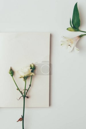 top view of beautiful tender rose with buds and lily isolated on grey