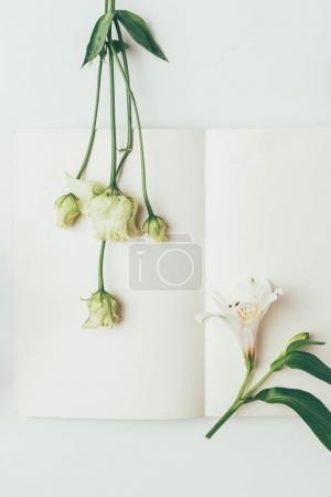 top view of beautiful tender white flowers and blank greeting card on grey