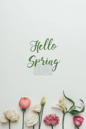 Photo for Beautiful tender blooming flowers and inscription hello spring on grey - Royalty Free Image