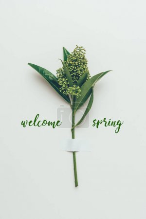 Photo for Beautiful flower buds on branch with green leaves and inscription welcome spring on grey - Royalty Free Image