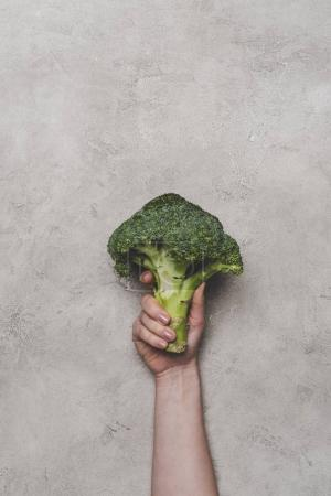 Photo for Cropped shot of person holding fresh organic broccoli on grey - Royalty Free Image