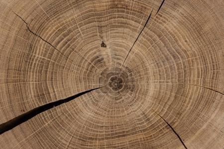 Circular sawed wood detailed background