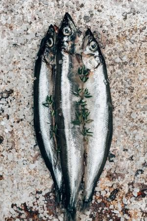 Three salted fish with rosemary on rustic surface