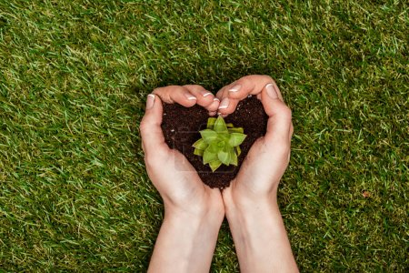 Photo for Cropped image of woman holding heart shaped soil with succulent in hands above green grass, earth day concept - Royalty Free Image