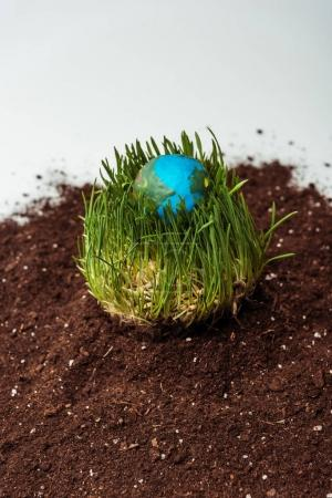 seedling with earth model on soil isolated on white, earth day concept