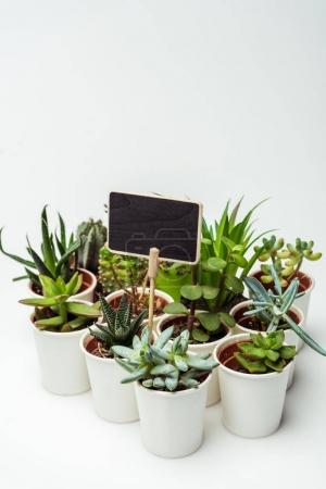 green potted succulents with blackboard isolated on white, earth day concept