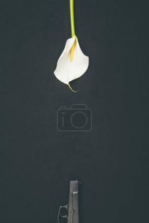 Photo pour Pistolet avec fleur de calla blanche isolé sur noir - image libre de droit