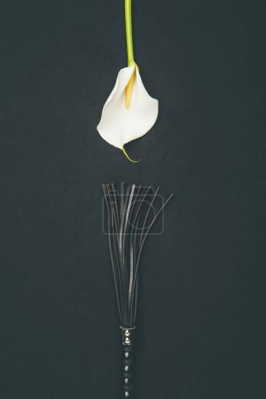 Black leather flogging whip with white calla flower isolated on black