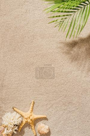 Photo for Top view of palm branch over sandy beach - Royalty Free Image