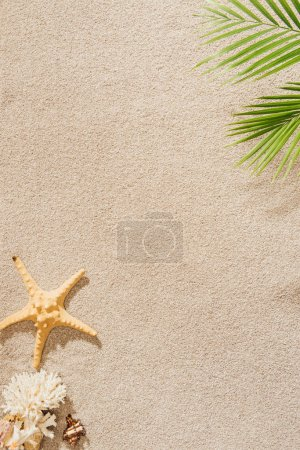 top view of seashell, coral and starfish lying on sandy beach with palm branch