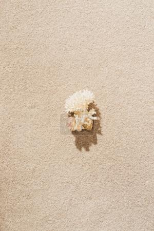 top view of coral lying on sandy beach