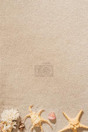 Photo pour Vue de dessus de coquillages, corail et couché sur la plage de sable de la mer - image libre de droit