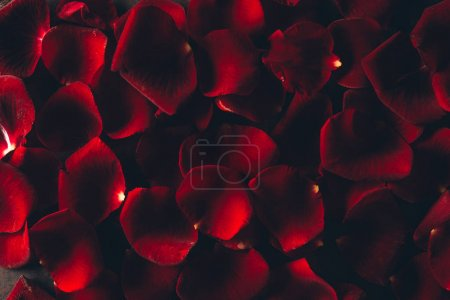 Photo for Beautiful red rose petals floral background - Royalty Free Image