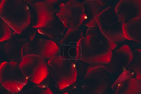 beautiful red rose petals floral background
