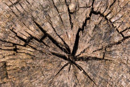 Circular sawed wood detailed background