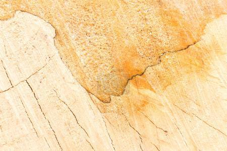 Photo for Hardwood and carpentry concept with sawed wood surface - Royalty Free Image