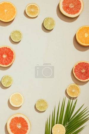 Photo for Full frame image of palm leaf, slices of grapefruits, limes, lemons and orange on white background - Royalty Free Image