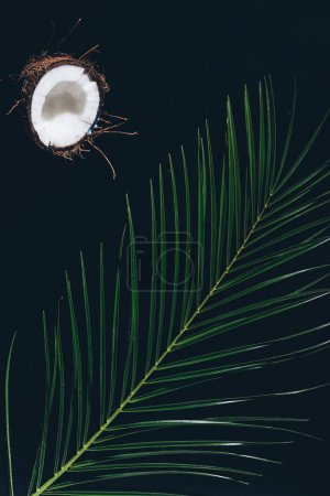 half of tasty healthy coconut and green palm leaves on black
