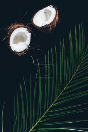 top view of halved coconut and green palm leaves on black