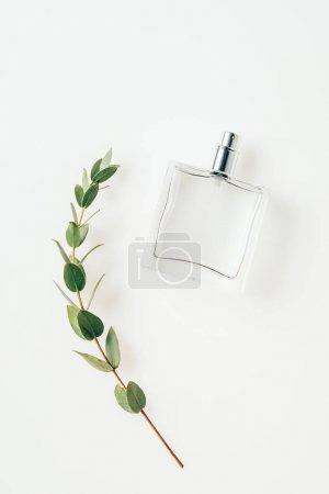 Photo pour Vue de dessus du flacon de parfum avec belle branche vert sur blanc - image libre de droit