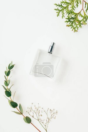 Photo for Top view of bottle of perfume with green branches on white - Royalty Free Image