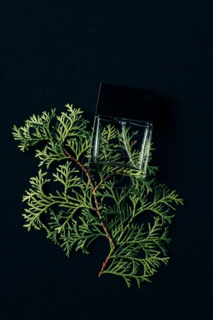 top view of bottle of perfume lying on spruce branch on black