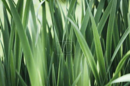 image plein cadre de fond d'herbe