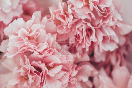 Photo pour Image plein cadre de la texture rose fleur de sakura - image libre de droit