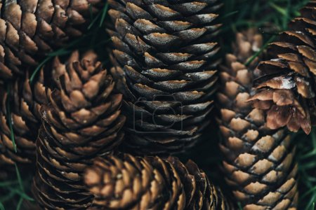 full frame image of pine cones background