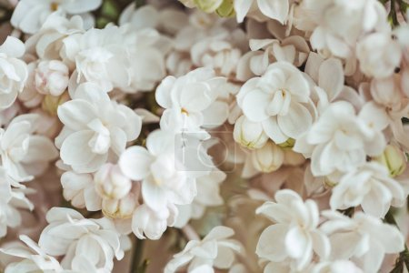 Photo for Full frame image of white lilac background - Royalty Free Image