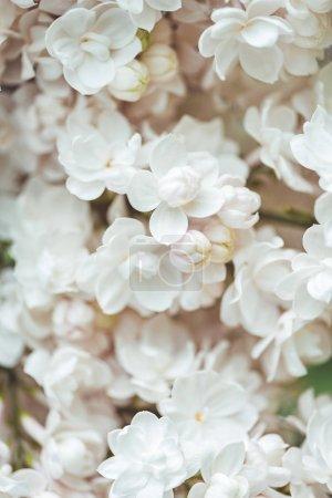 Photo pour Image plein cadre du fond lilas éponge blanc - image libre de droit