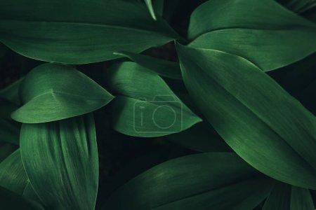 Photo pour Image plein cadre de plante feuilles fond - image libre de droit