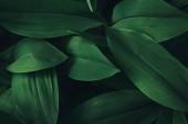 """Постер, картина, фотообои """"полный кадр изображения растений листья фон"""""""