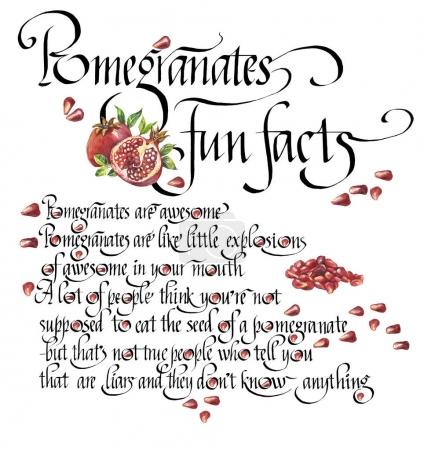 Word Pomegranate and text on the use of pomegranate with hand drawn watercolor pomegranate isolated on the white background. Art work. Lettering.