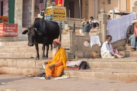 Photo pour Varanasi, Inde - 25 janvier 2017: vache noire et Shaiva sadhu, Saint homme assis sur les ghats du Gange à Varanasi, Inde - image libre de droit