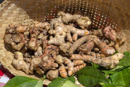 Photo pour Racines biologiques, fraîches, crues de gingembre et de curcuma à vendre dans un marché fermier local à Ubud, Bali, Indonésie. Gros plan - image libre de droit