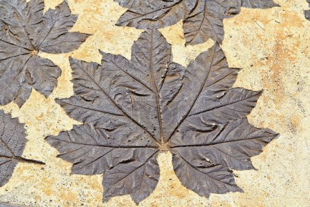 Dry autumn leaves on mortar