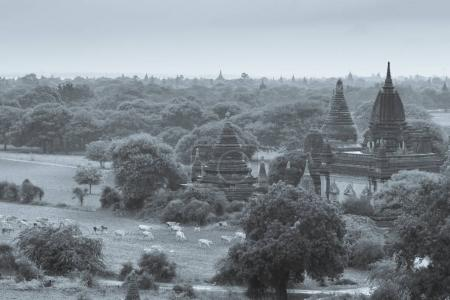 Bagan - old Pagoda in Bagan city