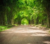 Green tunnel of bamboo trees