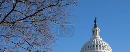A view of The Capitol Building rotunda in Washington, D.C.in the winter time with bare tree branches and bright blue sky.