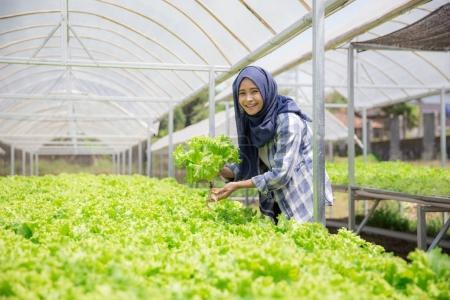 muslim woman working in hydrophonic