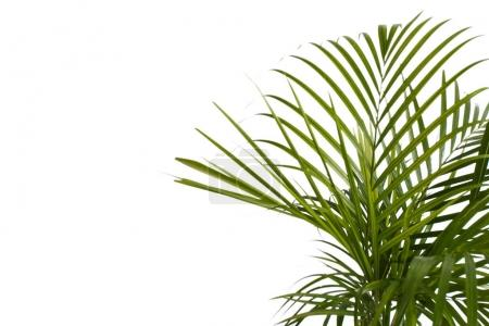 exotic tropical palm leaves